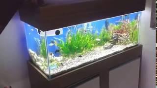 Aquario plantado com CO2 caseiro -  Faça você mesmo! Jardineiro de Aquário