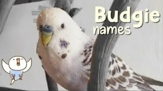 budgie name ideas for MALE and FEMALE