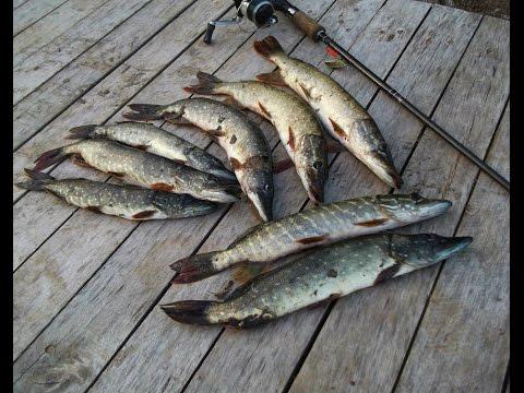 летняя рыбалка на спиннинг - 2016-10-02 20:36:25