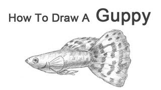How to Draw a Fish (Guppy)