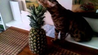 Если ананасов в организме не хватает...