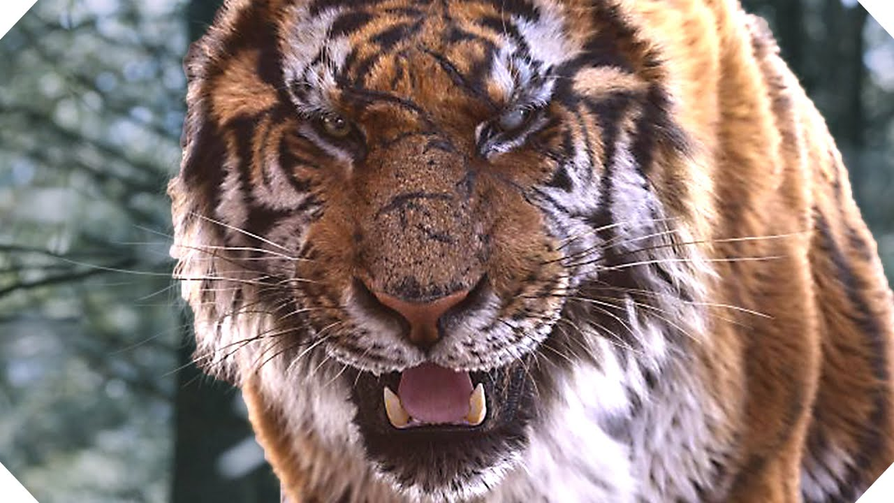 the tiger on the mountain essay Royal bengal tiger the royal bengal tiger, once known as the reigning feline of asia, are now on the brink of extinction this beautiful species is quickly disappearing due to human activity.