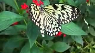 Ashadeepam    Malayalam Christian Devotional Song x264   Copy 3   Copy