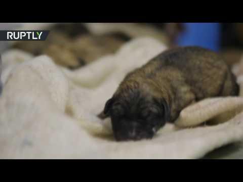 В Москве бездомная собака родила девять щенков в вагоне метро