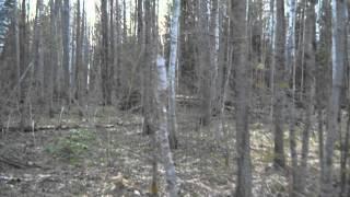 Закрытие сезона охоты на вальдшнепа
