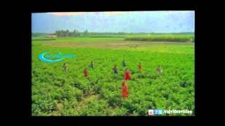 Samba Naathu HD Song With Lyrics