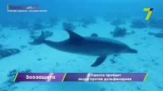 В Одессе пройдет акция против дельфинариев