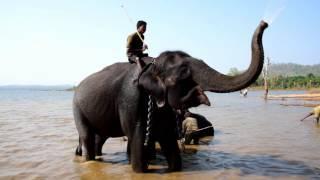 Sakrebailu elephant camp, Karnatika, India