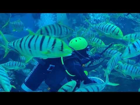 Dubai Aquarium – SHARKS 🦈 – CROC 🐊 – Underwater Zoo!!