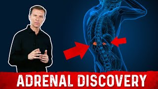 Adrenal Discovery