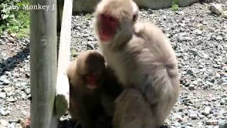 Child monkey of a spoof