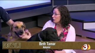 Pets on Parade - 09/26/15 - Dog rescue update