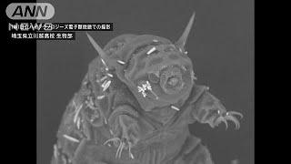 「最強の生物」と言われるクマムシの撮影に高校の生物部が成功しました...