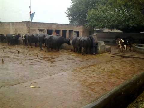 Farm House QDS Gujranwala Pakistan