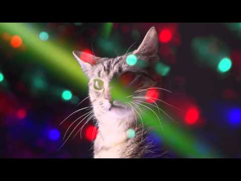 Meow mix disco (baile)