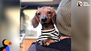 Watch This Little Dog Make The Craziest Recovery - NOODLES | The Dodo