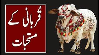 Qurbani Kay Mustahabat | Qurbani Q & A | Qurbani 2021 | Eid e Qurban | Sacrifice | Dilchasp Videos