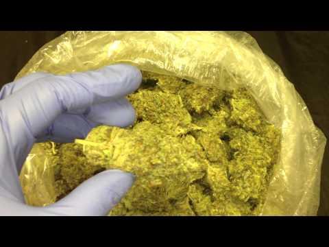 Lemon PSA from www.ogdeliveries.org