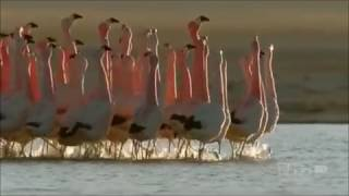 Dancing Animals Compilation- Animals who love to Move It
