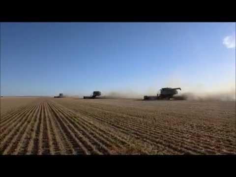 **Hauke Hinrichs**Big wheat harvest in WesternAustralia ! 11500 HA 50Ha/ hour! Powerharvest