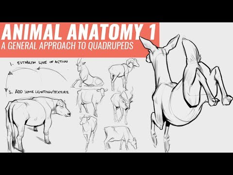 DRAWING ANIMALS 1: A GENERAL APPROACH TO QUADRUPEDS