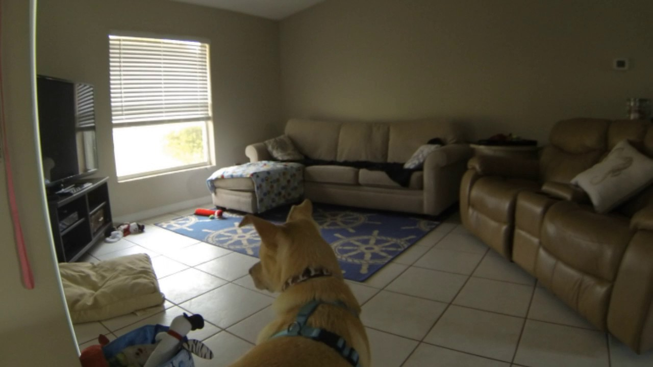 roomba 805 in the living room with the dogs youtube On liane v living room