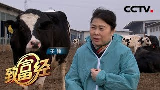 《致富经》 20190523 患癌女人 如何创造牛财富| CCTV农业