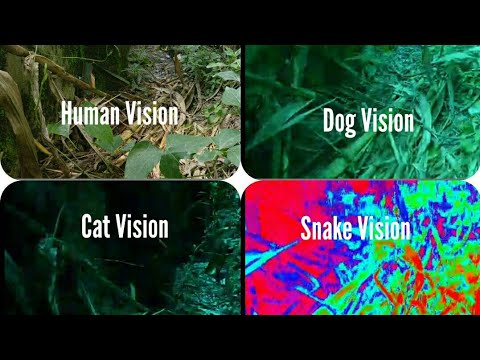 Animal vision how animal see the world | how pet see the ...