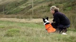 Sarda Wales Search And Rescue Dog