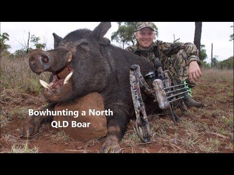 Bowhunting Australia: North QLD Boar