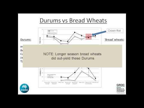 GRDC Grains Research Update, 4-5th March 2014, Northern Region, Goondiwindi QLD. Allan Peake
