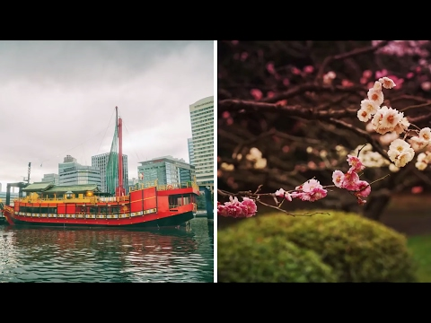 Where To Go in Japan | Cherry Blossoms | Tokyo 2020  Bucket List Guide | Vivienne Gucwa
