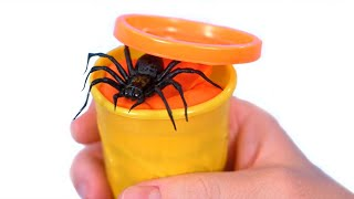 Spider In Play Doh!