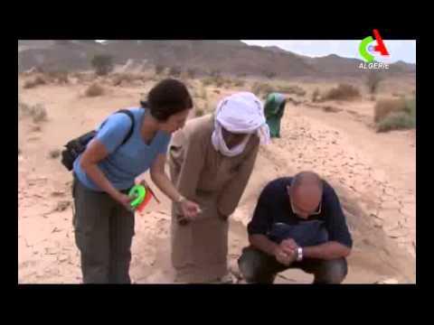 """Résultat de recherche d'images pour """"sur les traces du guépard algerie"""""""