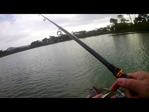 Trout Fishing At Lake Merced On 113018 And 121518