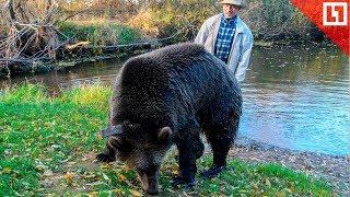 Медведь Тоша – новая звезда интернета