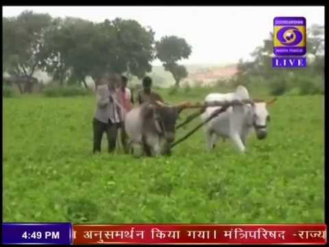 Fasal Bima Yojana - Ground Report from Shajapur in Madhya Pradesh