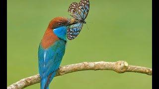 Bài 16.  Côn trùng và động vật nhỏ bé|| Bé học côn trùng