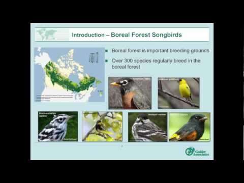 Disturbance Zones for Boreal Songbirds, Northeast Alberta