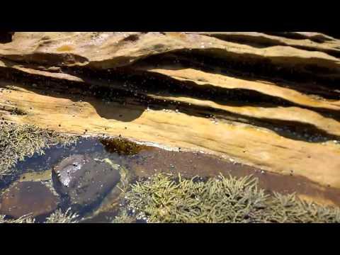 Squid fishing Cronulla