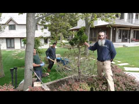 Save a Tree from Deer in the Hamptons New York
