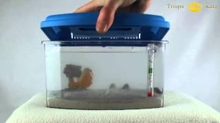Triops Acrylaquarium Urzeitkrebse Aufzuchtbecken von Triops King