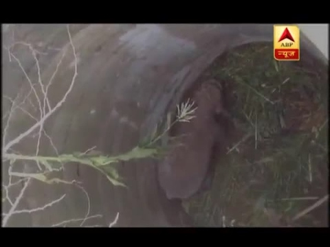 Tamil Nadu: Watch how a 10-year-old elephant was rescued