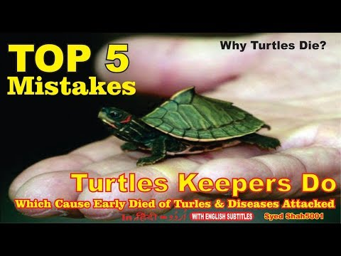Turtles 5 Common Mistakes Turtle Keeper Makes_ Why Turtles Die Early #turtles Care Guide