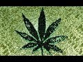 Download Stoner Reggae Playlist Vol. 12 MP3 song and Music Video