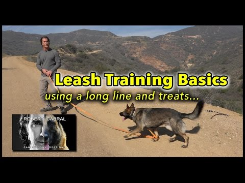 Leash Training Your Dog Part 1 Using a Long Line and Treats - Dog Training Video