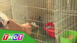 Thú vị nghề nuôi chim quốc | THDT