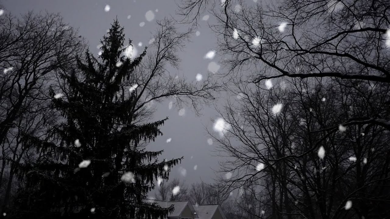 Snow Falling Wallpaper Hd Free Stock Footage Snow Falling With Trees Motion