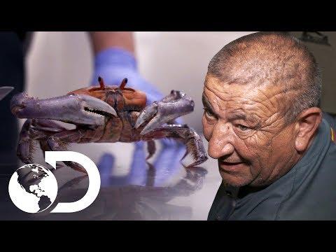 Os momentos mais surpreendentes | Controle de Fronteiras | Discovery Brasil