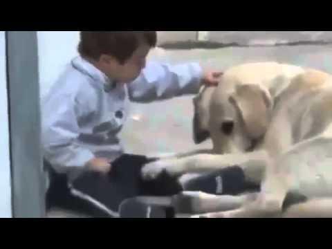 Betere Kind met Down Syndrome speelt met hond - YouTube BH-99